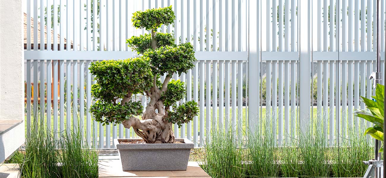 Harshdeep, Indoor pots, Outdoor pots, Manufacturer, India, Planters, hanging pots, Garden décor pots, Large planters, rotomolded pots , Online, Bonsai pots, Large collection, long lasting, designer pots, best, largest, India's largest collection of indoor and outdoor pots. large collection of indoor pots, Large collection of outdoor pots, beautiful homes, home décor, hotels, building lobby, house balcony, gardens, shopping malls, Mumbai, Pune, Bangalore, Hyderabad, Chennai, Delhi, Chandigarh, Lucknow, Agra, Ludhiana, Dehradun, Shimla, Raipur, Ranchi, Sikkim, Manipur, Nagaland, Nepal, Kolkata, Nasik, Aurangabad, Hyderabad, Vijaywada, Mysore, Kochi, Coimbatore, Ahmedabad, Surat, Rajkot & Vadodara, Nursery, best pots and planters manufacturers, bhiwandi, distribution channel spread all across India, manufacture all types of pots, 100% recyclable, Succulent Pots, Table Top Planter, Hanging Pots, Indoor Pots, Bonsai Pots, Outdoor Planters, Large Planters, Garden Decor pots, gardens, architects, builders, gardeners Buy online, Amazon online store, Buy pots online, flower pots, Style planters, tray pots, round pots, rectangular shape pots, Window hanging pots, tall pots with stand, pots for building lobby, pots for balcony, Pots on wheel, Strong pots, Plastic post, pots for malls, Frp series, Pots accessories, large round shape pots, Square shape pots, pots for gardens, bunglow lobby pots